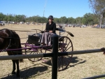 024-cart.jpg