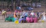 035-camels.jpg