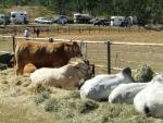 037-cattle.jpg